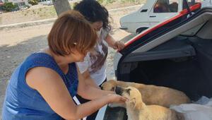 Yavru köpek, yaralı annesinin yanından ayrılmadı