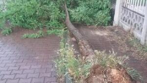 Bilecikte, şiddetli rüzgar ağaçları kökünden söktü