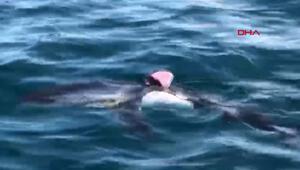 Saros Körfezinde bir köpek balığı, cep telefonu  kamerasıyla böyle görüntülendi