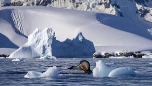 Antarktikada Çevre Koruma Protokolünün Uygulanmasına Dair Yönetmelik yayımlandı