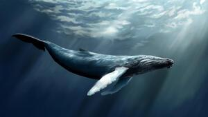 Balinalarla ilgili çok şaşıracağınız gerçekler