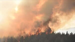 Tarım ve Orman Bakanlığından yangın söndürme atağı