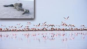 Ölü flamingo muamması
