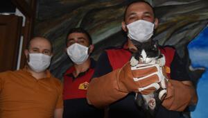 Giresunda iş yerinin havalandırma boşluğunda sıkışan kedi yavrusu kurtarıldı