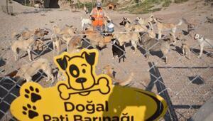 Koronavirüs engeline takılan Patiköy yeniden açıldı