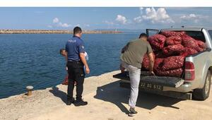 Edirnede 1 ton kaçak midye ele geçirildi