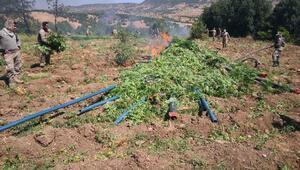 Diyarbakırda dev operasyon: 7 milyon kök Hint keneviri, 1.6 ton esrar ele geçirildi