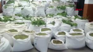 Diyarbakırda rekor uyuşturucu: 7 milyon kök Hint keneviri, 1.6 ton esrar ele geçirildi