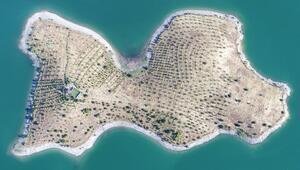 Bakan Pakdemirlinin talimatıyla Robinson Ziyanın adasında hasat yapıldı