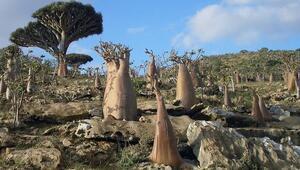 Yemende Hint Okyanusunun Galapagosu olarak bilinen Sokotra ayrılıkçılar tarafından ele geçirildi