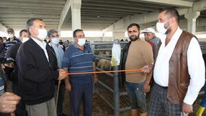 Hayvan pazarında sopalı pazarlık