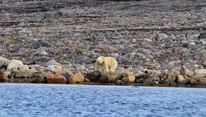 Kuzey Kutbunda ölçülen 38 derece sıcaklık tarihe geçti
