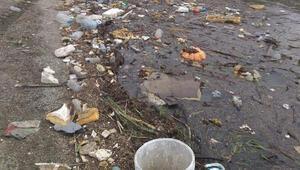İznik Gölü, yağmurla gelen atıklara çöplüğe döndü