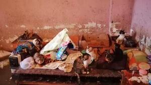 Evini su basan yaşlı kadın kedi ve köpekleri için ağladı