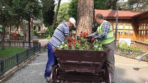 Amasyada 40 bin mevsimlik çiçek açtı