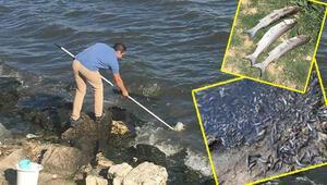 Çevre ve Şehircilik Bakanlığı Küçükçekmece Gölündeki balık ölümlerine ilişkin açıklamada bulundu