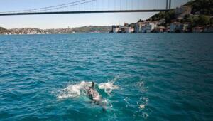İstanbul Boğazında yunuslar görüntülendi
