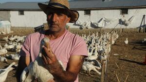 Bitliste kurdu Yurt dışından gelen taleplere yetişemiyor