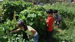Minikler, kendi sebze ve meyvelerini kendileri yetiştiriyor