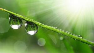 Güneş Işığı Vitamini ve Etkileri