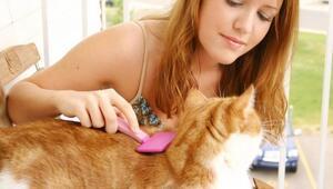 Kedilerde tüy bakımı ve fırçalama