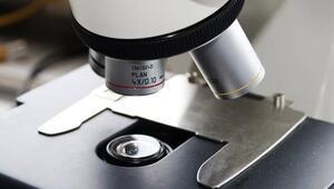 Dondurulmuş embriyo mu taze embriyo mu
