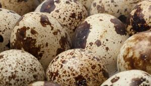 Bıldırcın yumurtasının faydaları nelerdir