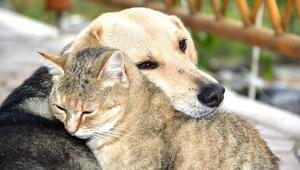 Hepsine kocaman alkış Hayvanları Koruma Günü'ne özel kampanyalar