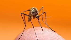 Batı Nil Virüsü (BNV) nedir Batı Nil Virüsü nasıl bulaşır