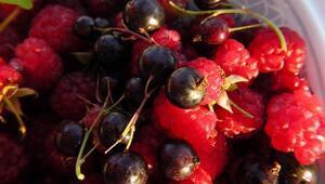 Kırmızı meyveler pankreas kanseri riskini azaltıyor