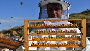 Arı sütünün kilosu 7 bin liradan alıcı buluyor
