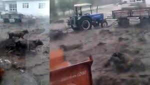 Muşta sel felaketi Panik anları kamerada