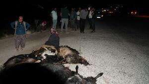 Otomobilin keçi sürüsüne daldı: 1 yaralı, 22 keçi öldü