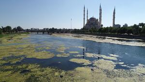 Seyhan Nehri yosunlar nedeniyle yeşile büründü