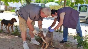 Geliboluda av köpeklerine kuduz aşısı yapıldı
