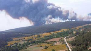 Son dakika haberi: Çanakkale Gelibolu Yarımadasında yangın Bakandan son durum açıklaması