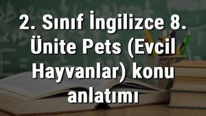 2. Sınıf İngilizce 8. Ünite Pets (Evcil Hayvanlar) konu anlatımı