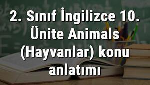 2. Sınıf İngilizce 10. Ünite Animals (Hayvanlar) konu anlatımı
