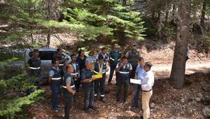 Gülnar ormanlarında inceleme