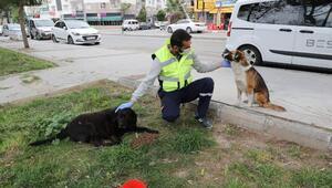 Sokak hayvanları için bir kap su kampanyası