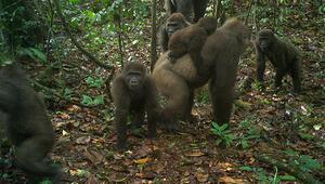 Nijeryada bu türe ender rastlanıyor; ilk kez yavrularıyla görüntülendiler