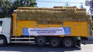 Silivri'de hayvancılıkla uğraşan köylüye ücretsiz saman dağıtıldı
