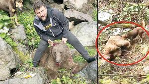 Vurduğu ayıyı köpeklere parçalatmıştı... O cani serbest