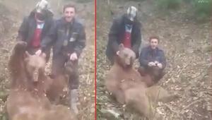 Trabzonda vurdukları ayıya işkence eden avcılar kamerada