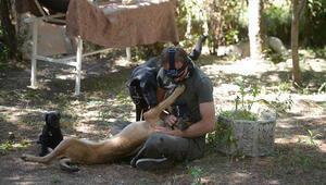 Kurt köpeklerini eğitip emniyet teşkilatına hibe ediyor