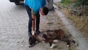 Vanda sokak hayvanlarına yönelik çalışmalar sürdürülüyor