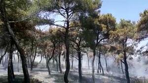 Geliboluda 6 hektar ormanlık alan yandı