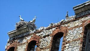 Edirnede tarihi binalar leyleklerin yuvası oldu
