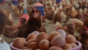 Kümes hayvancılığı üretiminde artış