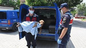 Jandarma zehirlenen yavru köpeği tedavi ettirip, sahip çıktı